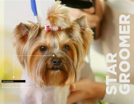 Star Groomer